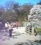 城山公園桜祭